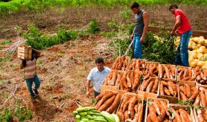 Prefeitura vai pagar R$ 2,5 milhões por centro de agricultura familiar em Parauapebas