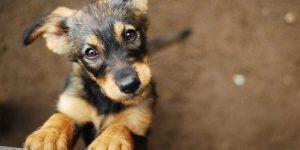 Abril Laranja marca combate à crueldade animal